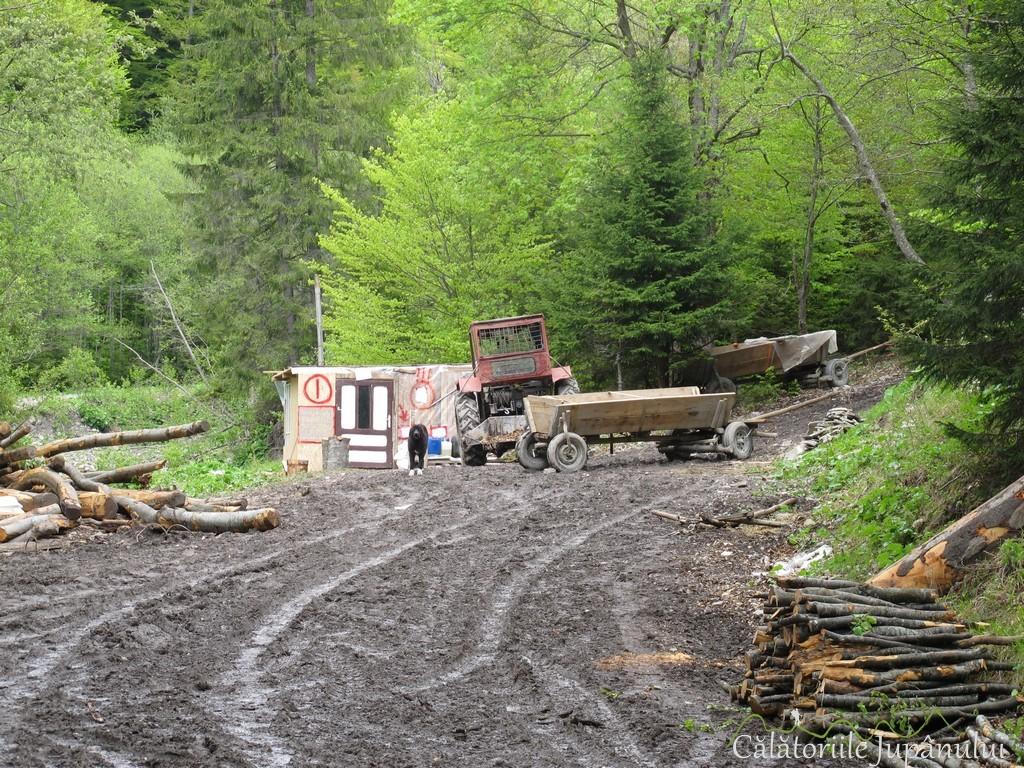 Poiana cu narcise - Valea Rea 074