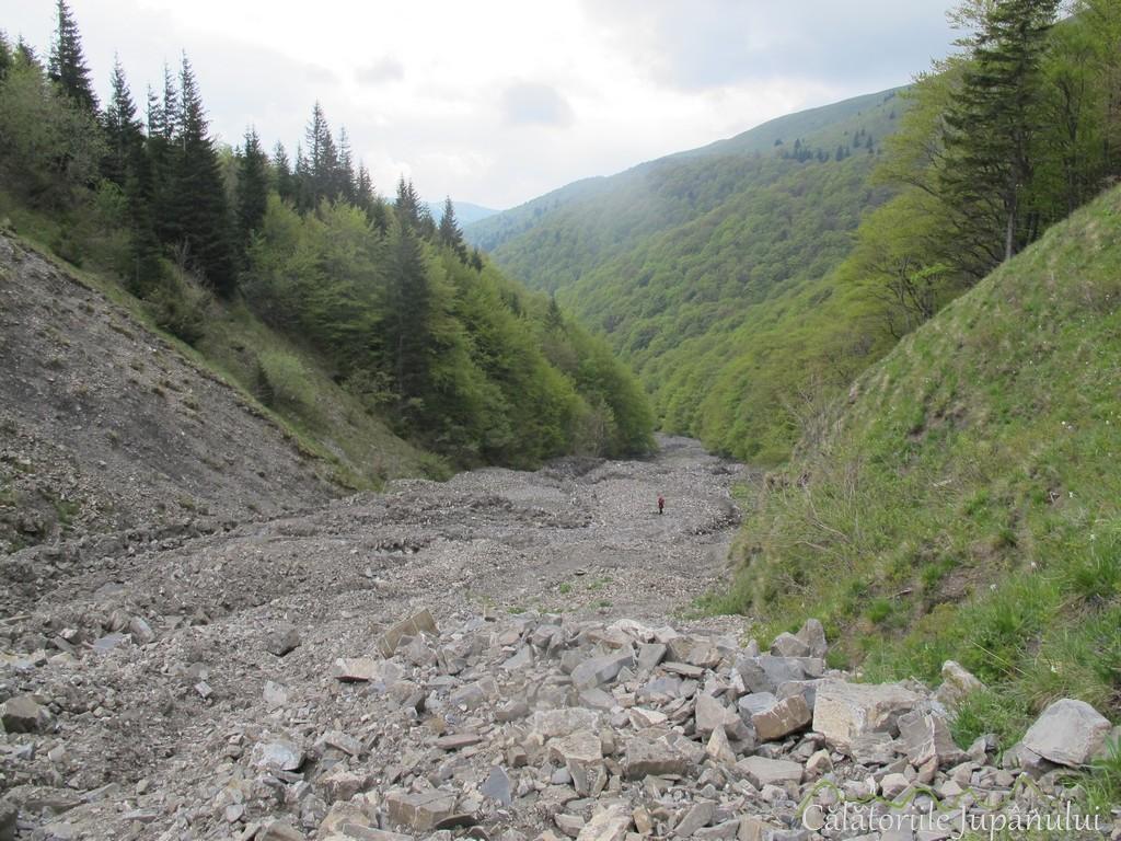 Poiana cu narcise - Valea Rea 114